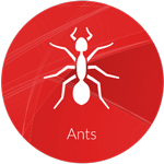 Ant spraying and eradication